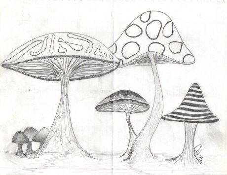 Shroom Doodle