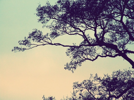 scenic reflections pastel sky