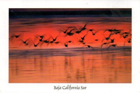 Baja Birds